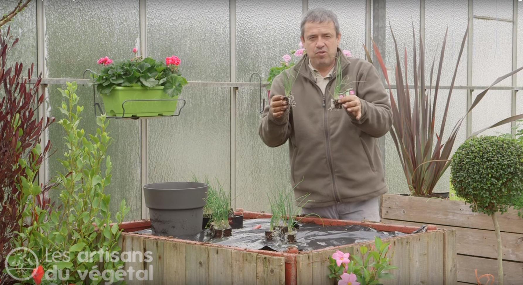La plantation des oignons - Comment planter des oignons ...